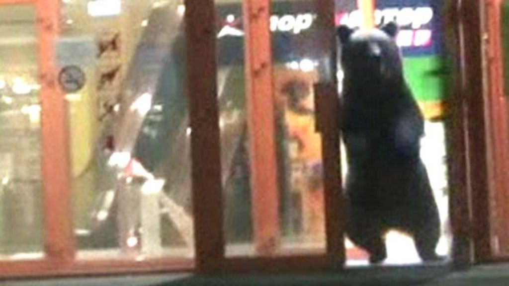Bear killed after escape from Russia shopping mall - BBC News