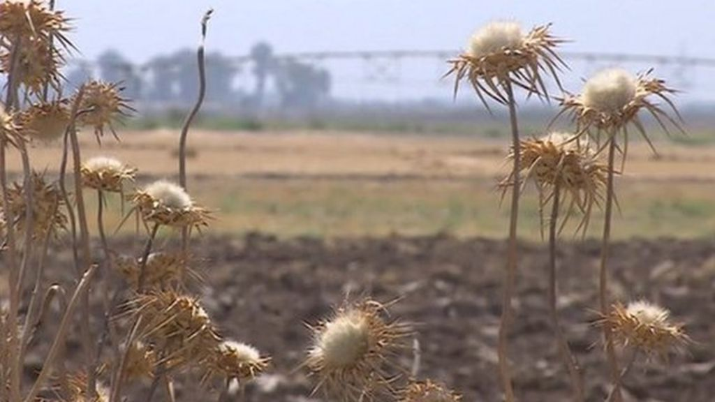 Food shortage leaving Iraqi farmers in desperate situation ...