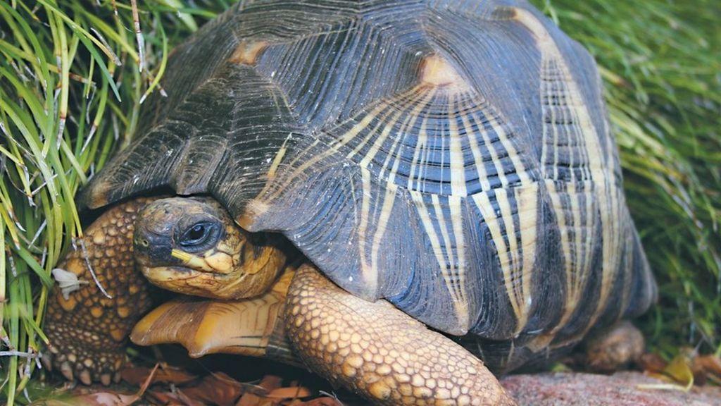 Australian zoo fears for missing endangered tortoise - BBC News