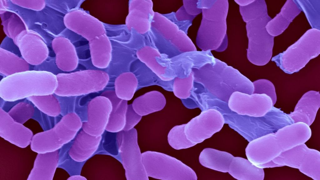 World's most threatening superbugs ranked in new list - BBC News