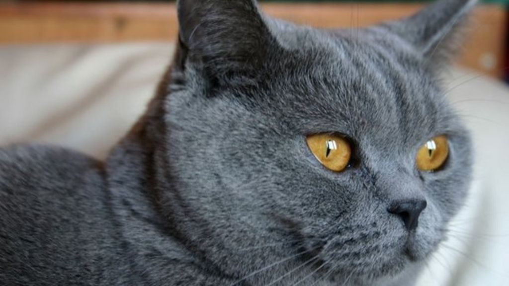 Lincolnshire: Multiple cats killed by 'horrible' poisoning - BBC News