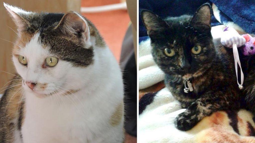 Croydon cat killings: Police probe 'gruesome' deaths - BBC News