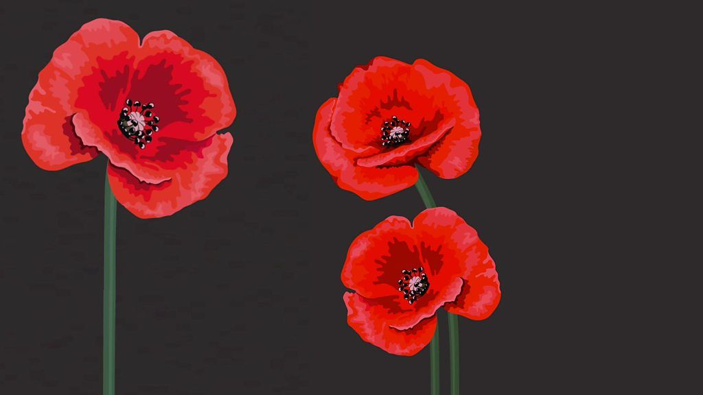 red white purple black choosing a remembrance day