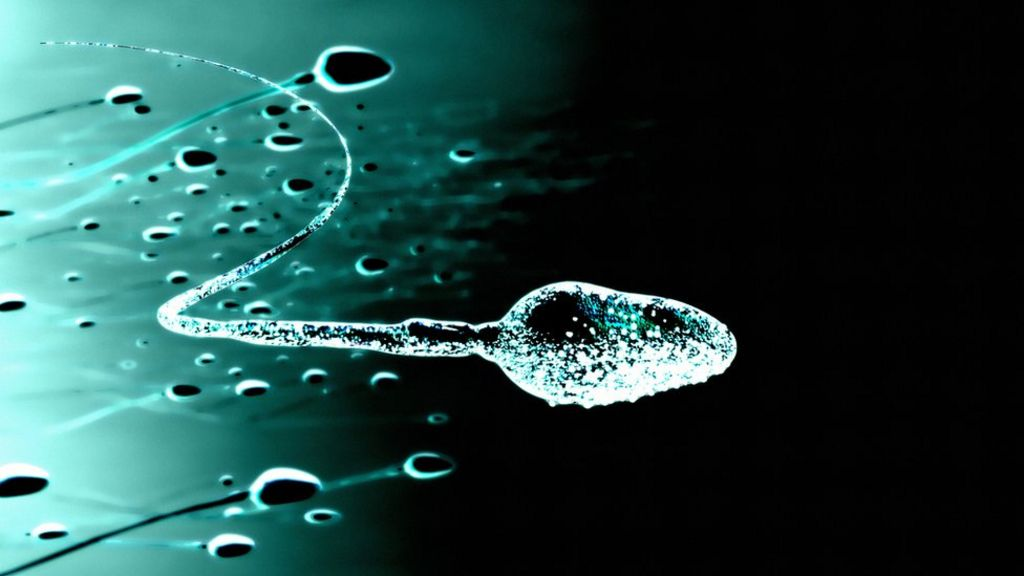 Male contraceptive gel passes monkey test - BBC News