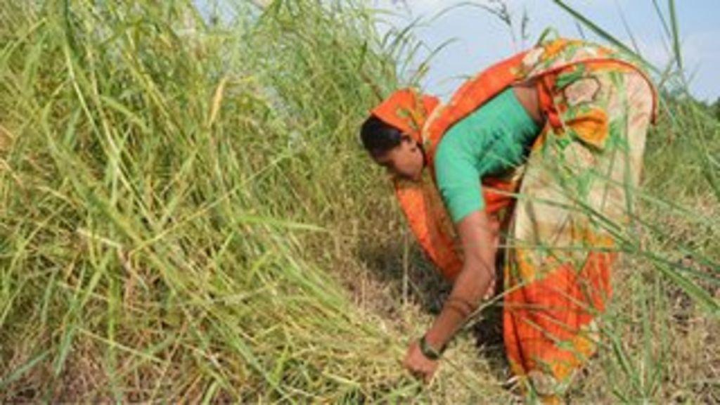 India business report bbc 2015 hungary