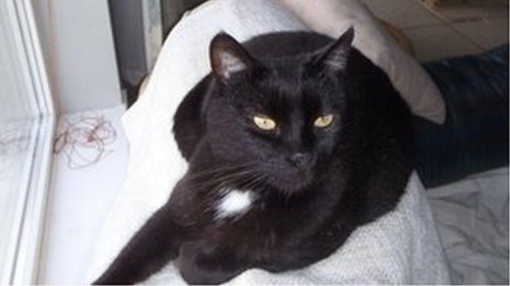 North Down hunt dogs kill cat in Kircubbin - BBC News
