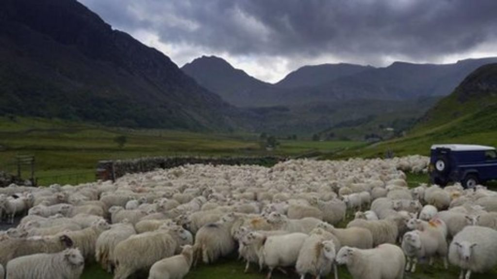 Farm wages bill blocked by UK Attorney General - BBC News