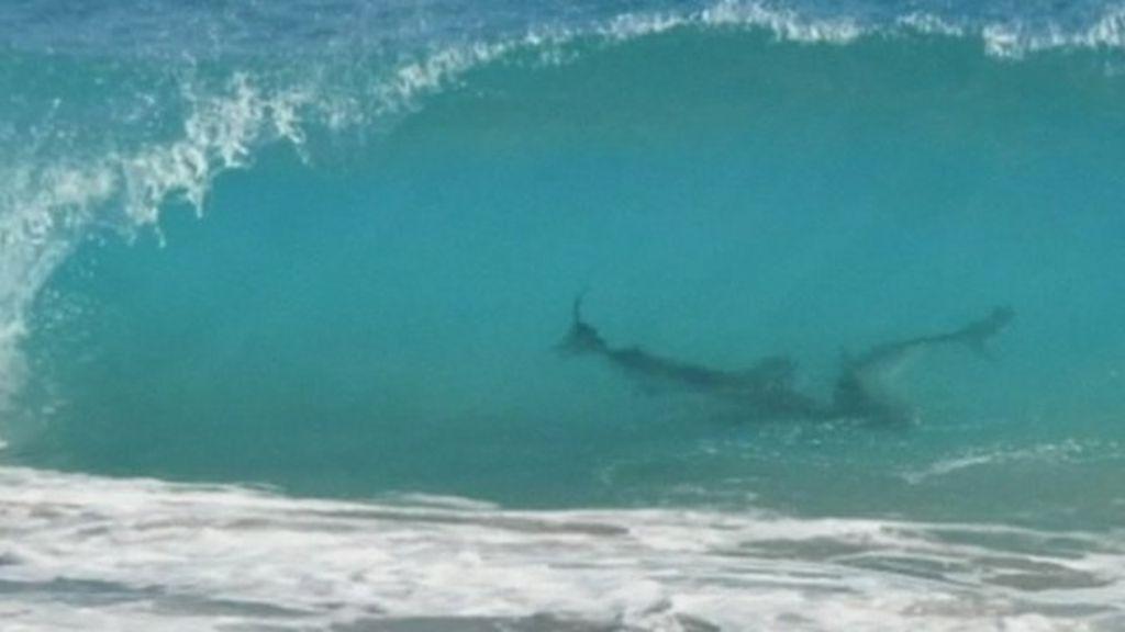 Sharks Daytona Beach