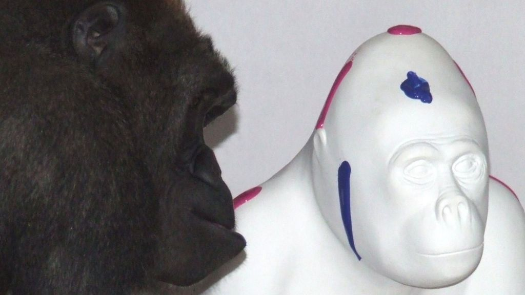N'dowe Gorilla Paignton zoo gorilla N Dowe