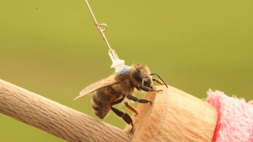 How bees can be affected by pesticides - BBC News
