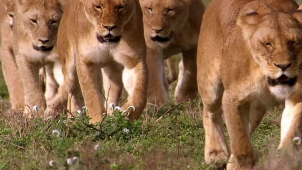 Worries over new roads in Tanzania's Serengeti