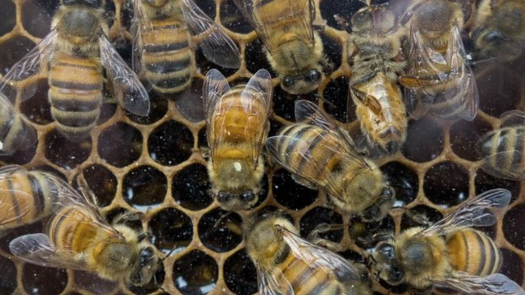 Bees - Magazine cover