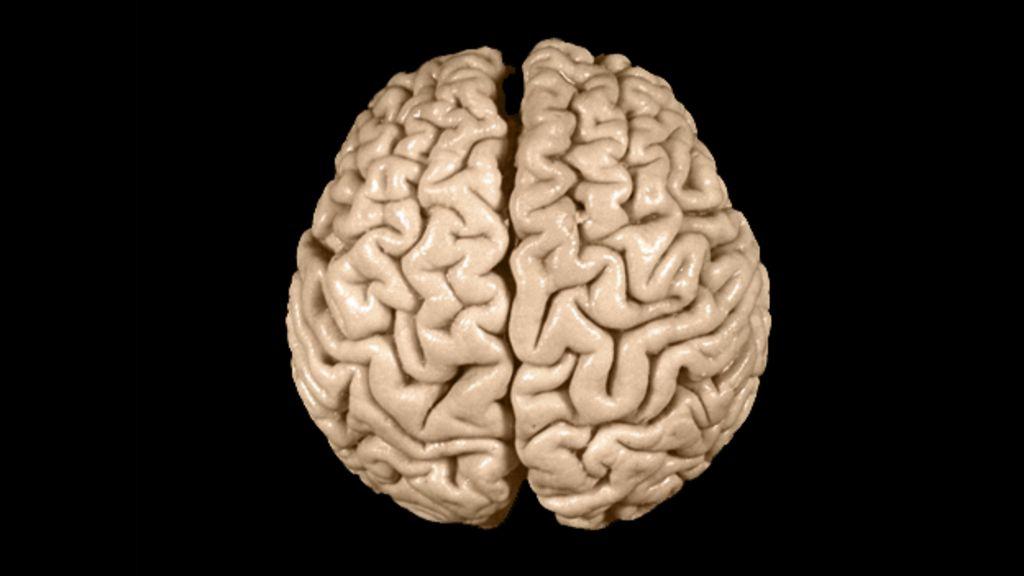 The Strange Afterlife Of Einsteins Brain BBC News