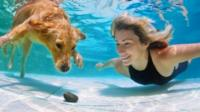 Dog and woman swimming