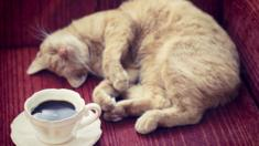 Cat and a cup of coffee
