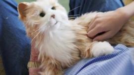 Robotic companion cat