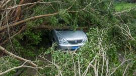 A car is seen under toppled trees.