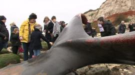 Whale carcass being inspected by adults and children on Hunstanton beach