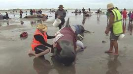 Volunteers helping whale rescue