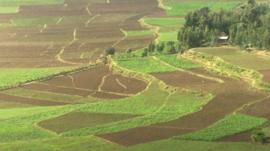 Fields in Ethiopia