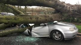 Car crushed under a tree