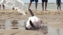 Shark on beach