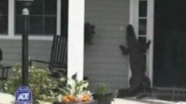 Alligator at a house in South Carolina