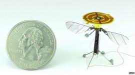 Winged insect (c) AAAS