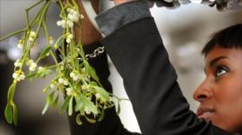 Mistletoe being hung