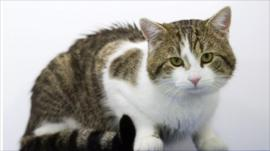 Larry the new Downing Street cat