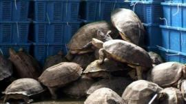 Sea turtles were among the animals seized