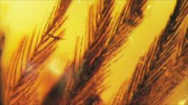 Feather in amber