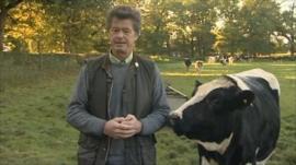 Gwyn Jones and cow