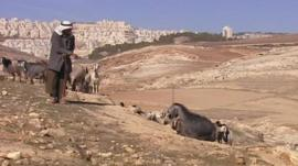 Shepherd with sheep and goats in hills around Bethlehem
