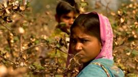 Child working in the cotton field