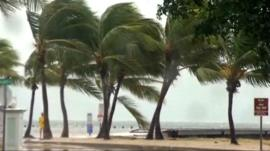 Strong winds batter Florida trees