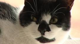 Denis the cat burglar