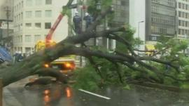 Fallen tree blocking road