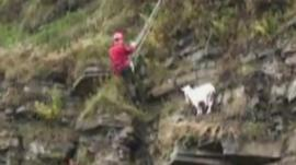 Mountain Rescue team member and goat on cliff