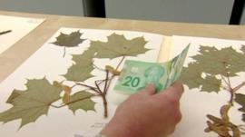 Canadian bank note compared to Maple leaves