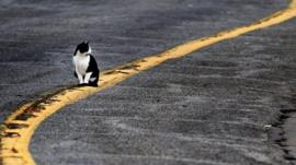 A cat sits on a painted road stripe