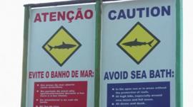 Signs warning of shark attacks