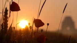 The sun rises over wild poppies growing on the edge of a field at Thiepval in northern France.