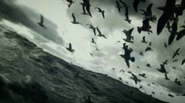 A scene from Leviathan