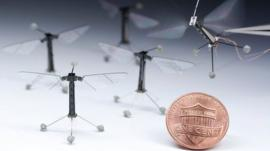 Tiny robotic insect