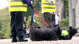Skye terriers