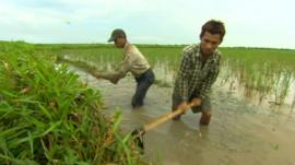 Farmers in Burma