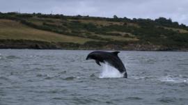 A bottlenose dolphin