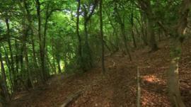 Laurie Lee's wood