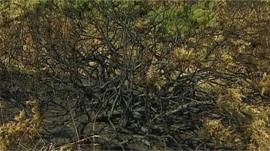 Burnt vegetation